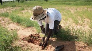 Sadzenie drzew w Afryce